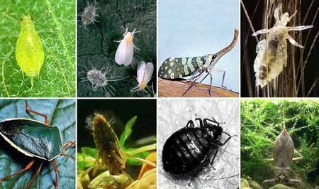 Как бороться с вредителями растений
