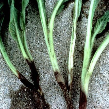 Методы борьбы с корневой гнилью