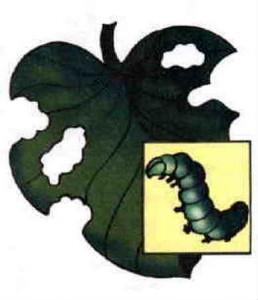 Вредители растений Гусеницы