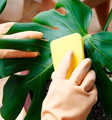 Гигиена и источники инфекции у растений