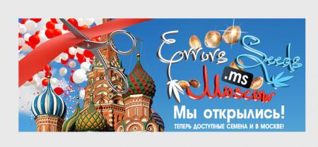 Errors Seeds в Москве