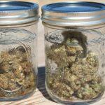 Водное очищение шишек марихуаны